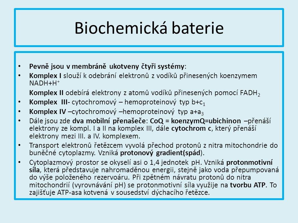 Biochemická baterie Pevně jsou v membráně ukotveny čtyři systémy: Komplex I slouží k odebrání elektronů z vodíků přinesených koenzymem NADH+H + Komplex II odebírá elektrony z atomů vodíků přinesených pomocí FADH 2 Komplex III- cytochromový – hemoproteinový typ b+c 1 Komplex IV –cytochromový –hemoproteinový typ a+a 3 Dále jsou zde dva mobilní přenašeče: CoQ = koenzymQ=ubichinon –přenáší elektrony ze kompl.