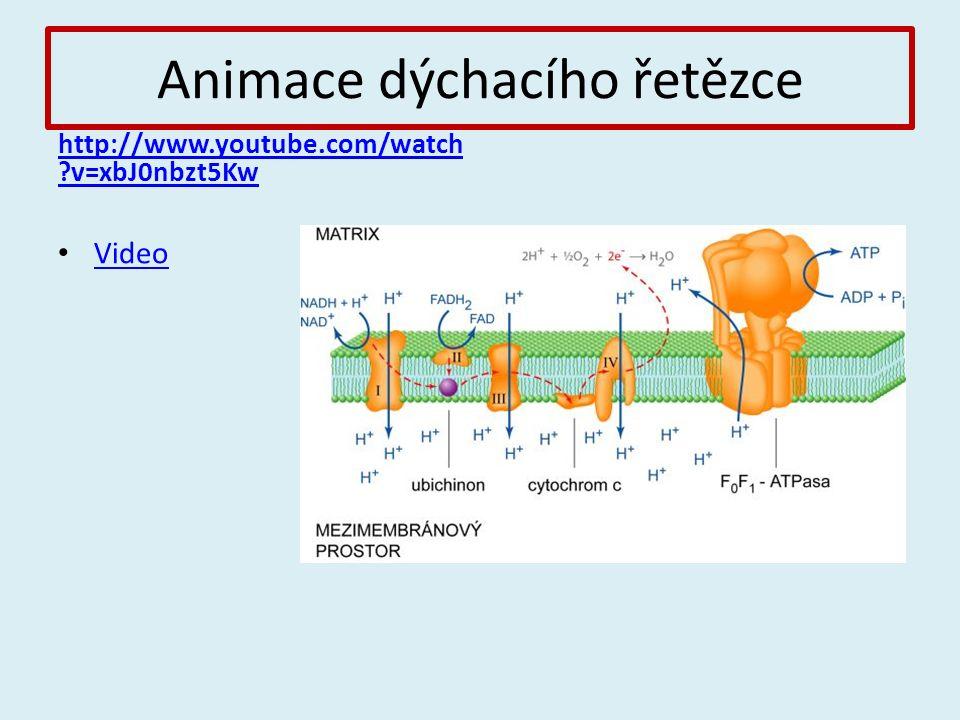 Animace dýchacího řetězce http://www.youtube.com/watch v=xbJ0nbzt5Kw Video
