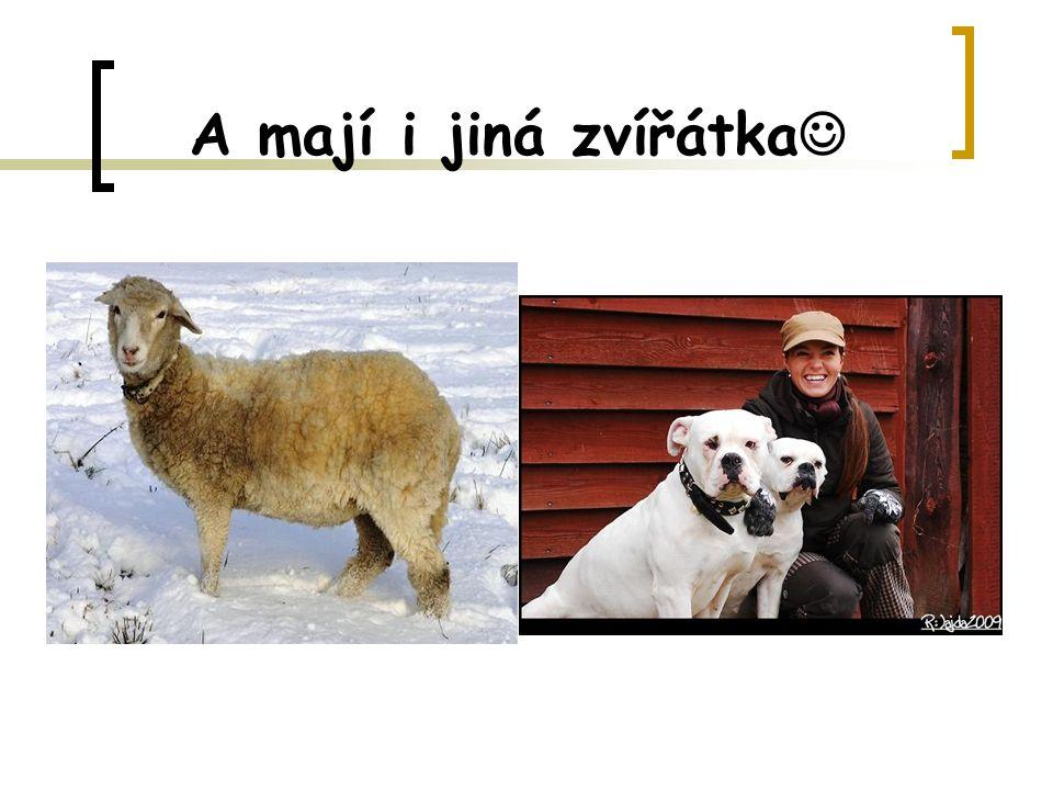 A mají i jiná zvířátka