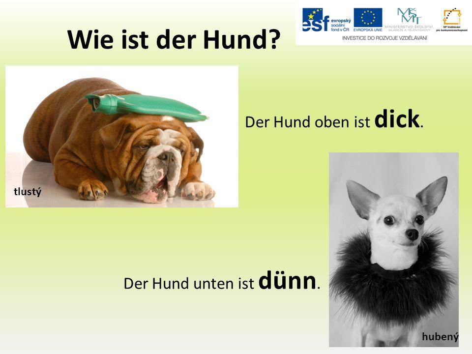 Wie ist der Hund Der Hund unten ist dünn. Der Hund oben ist dick. tlustý hubený
