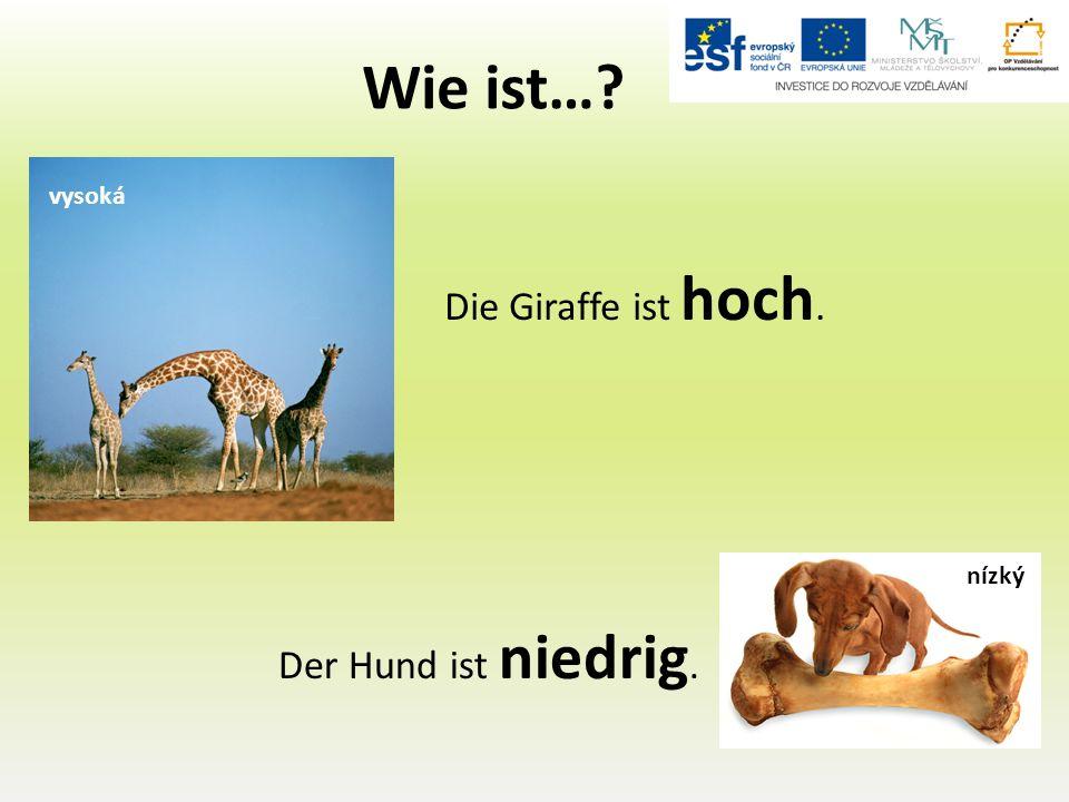 Wie ist… Die Giraffe ist hoch. Der Hund ist niedrig. vysoká nízký