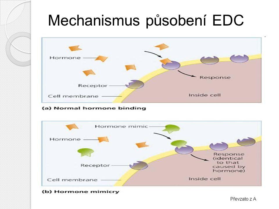 Účinky EDC nepříznivý vliv na růst, reprodukci, imunitní a nervový systém zvířat i lidí poruchy pozorovány u šneků, ryb, rybožravých ptáků, aligátorů a mořských savců – především snižování plodnosti zvířata žijící v okolí čistíren odpadních vod → feminizace samců doba expozice (dětství x dospělost) různé druhy nádorových onemocnění – prsu,prostaty aj.