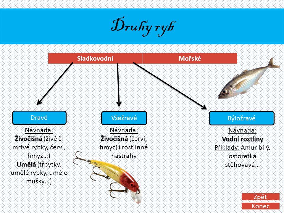 Druhy ryb SladkovodníMořské Dravé Všežravé Býložravé Vodní rostliny Návnada: Vodní rostliny Příklady: Amur bílý, ostoretka stěhovavá… Živočišná Návnada: Živočišná (červi, hmyz) i rostlinné nástrahy Živočišná Umělá Návnada: Živočišná (živé či mrtvé rybky, červi, hmyz…) Umělá (třpytky, umělé rybky, umělé mušky…) Konec Zpět