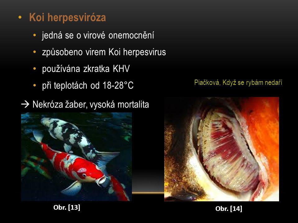 Koi herpesviróza jedná se o virové onemocnění způsobeno virem Koi herpesvirus používána zkratka KHV při teplotách od 18-28°C  Nekróza žaber, vysoká m