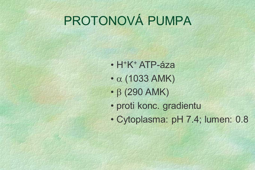 PROTONOVÁ PUMPA H + K + ATP-áza  (1033 AMK)  (290 AMK) proti konc. gradientu Cytoplasma: pH 7.4; lumen: 0.8