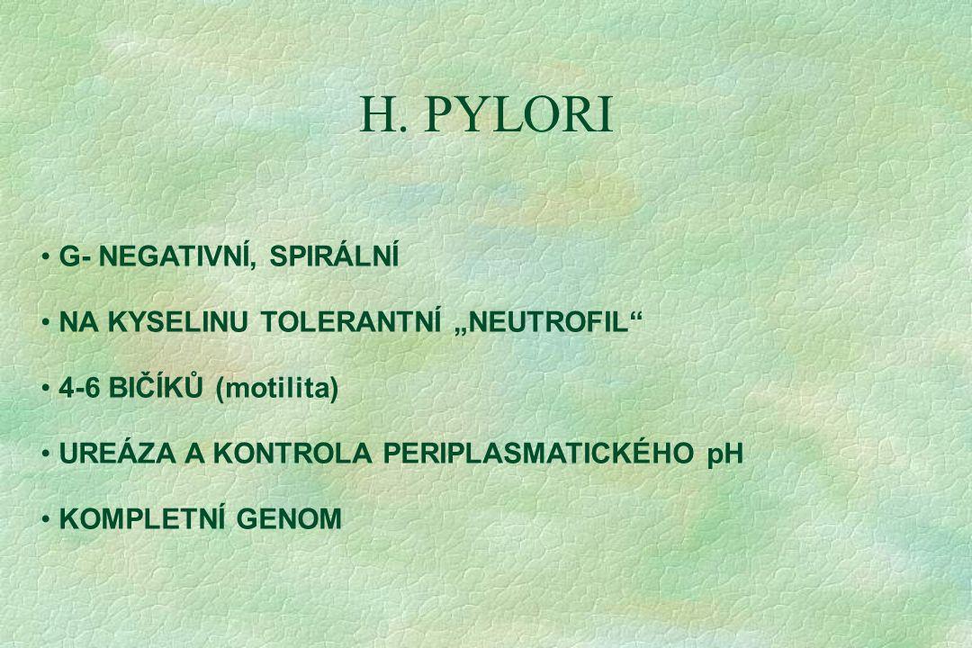 """H. PYLORI G- NEGATIVNÍ, SPIRÁLNÍ NA KYSELINU TOLERANTNÍ """"NEUTROFIL"""" 4-6 BIČÍKŮ (motilita) UREÁZA A KONTROLA PERIPLASMATICKÉHO pH KOMPLETNÍ GENOM"""