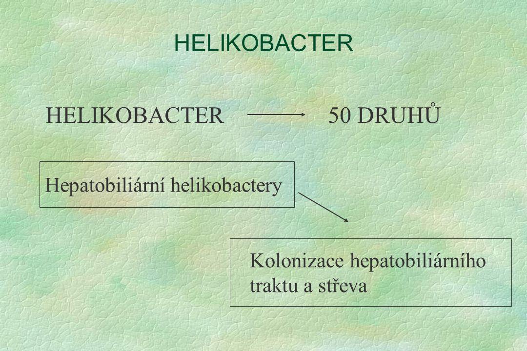 HELIKOBACTER 50 DRUHŮ Kolonizace hepatobiliárního traktu a střeva Hepatobiliární helikobactery
