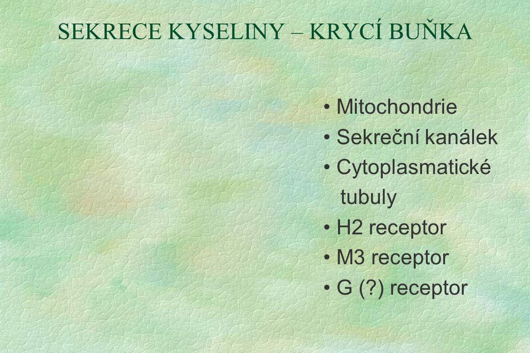 SEKRECE KYSELINY – KRYCÍ BUŇKA Mitochondrie Sekreční kanálek Cytoplasmatické tubuly H2 receptor M3 receptor G (?) receptor