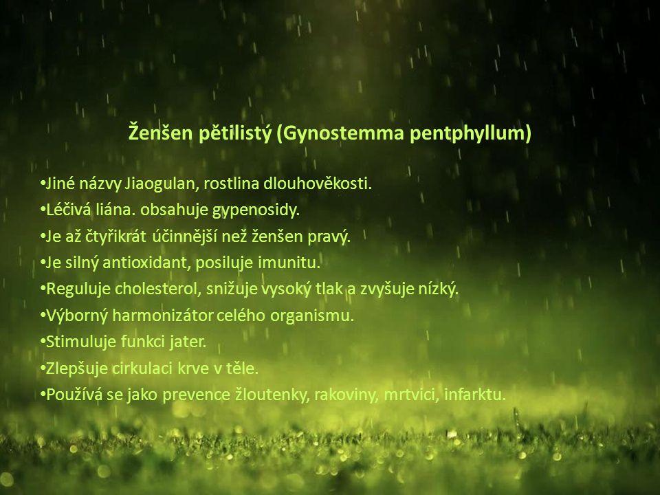 Ženšen pětilistý (Gynostemma pentphyllum) Jiné názvy Jiaogulan, rostlina dlouhověkosti.