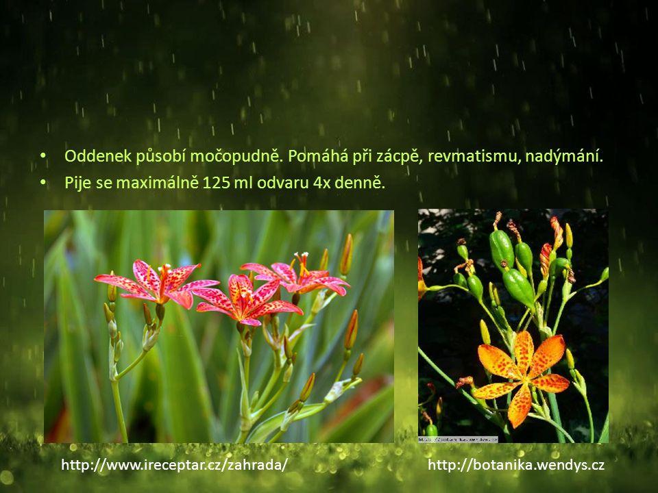 Třapatka nachová (Echinacea purpurea) Vytrvalá, až 1 m vysoká bylina, původem ze Severní Ameriky Tradiční léčivá bylina severoamerických indiánů.