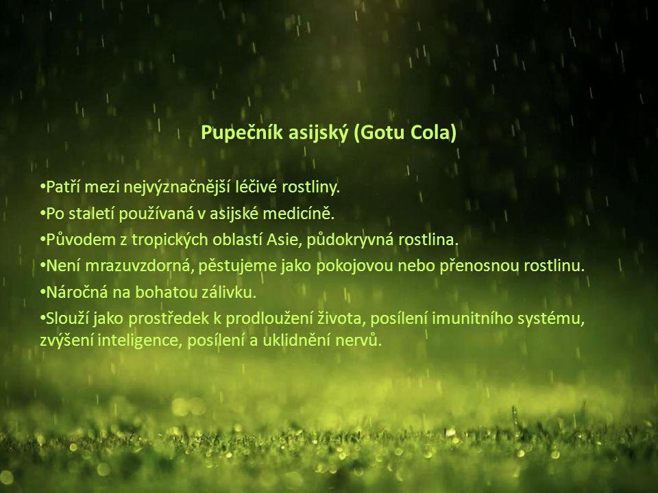 Pupečník asijský (Gotu Cola) Patří mezi nejvýznačnější léčivé rostliny.