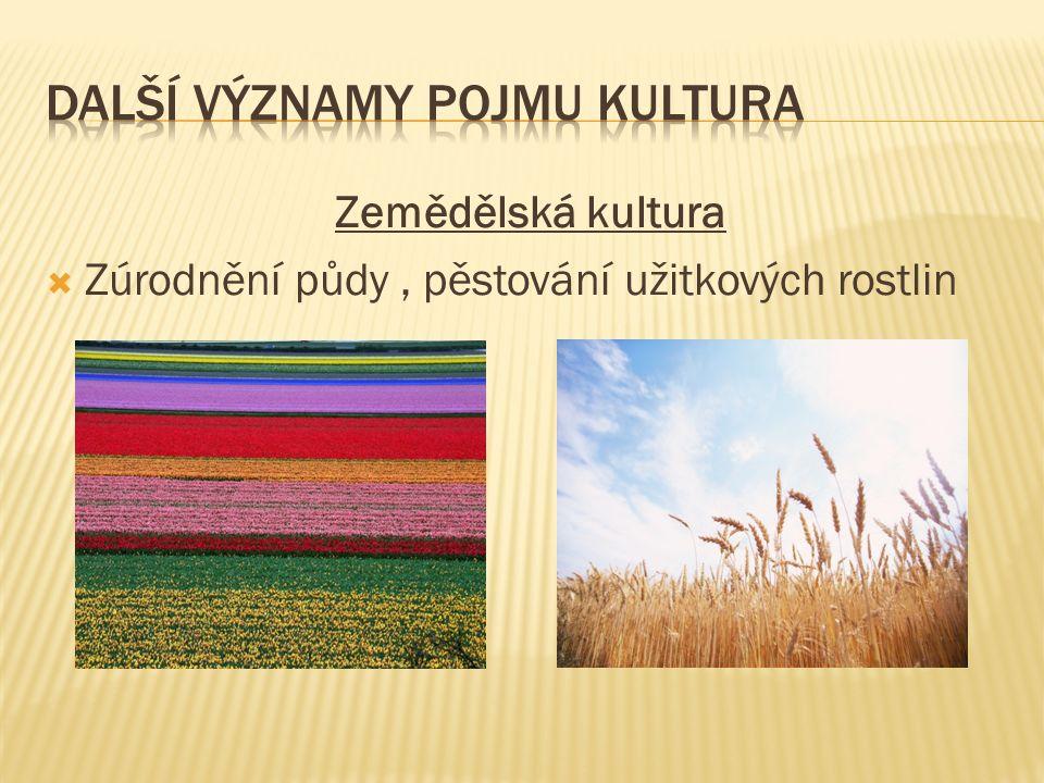 Zemědělská kultura  Zúrodnění půdy, pěstování užitkových rostlin