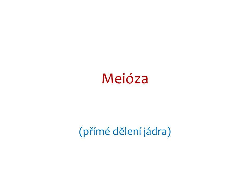 Meióza (přímé dělení jádra)