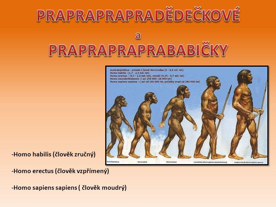 -Homo habilis (člověk zručný) -Homo erectus (člověk vzpřímený) -Homo sapiens sapiens ( člověk moudrý)