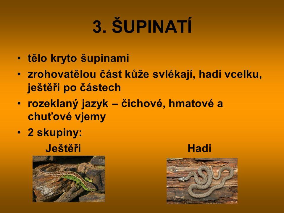 3. ŠUPINATÍ tělo kryto šupinami zrohovatělou část kůže svlékají, hadi vcelku, ještěři po částech rozeklaný jazyk – čichové, hmatové a chuťové vjemy 2