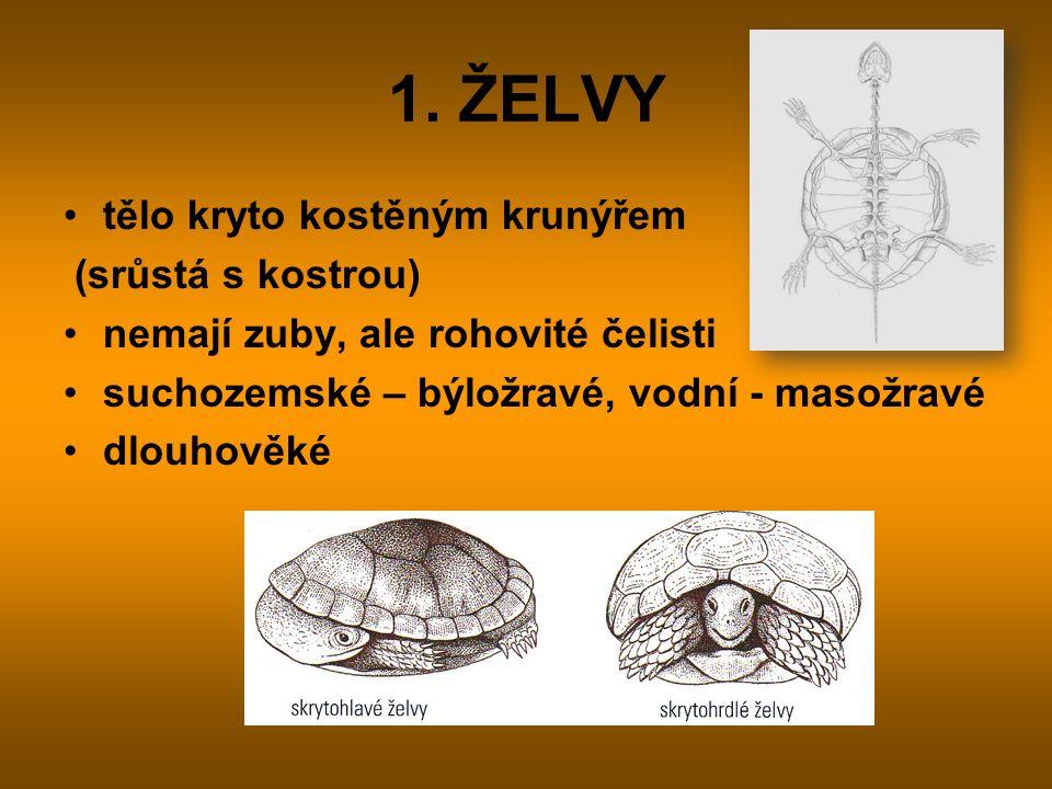 1. ŽELVY tělo kryto kostěným krunýřem (srůstá s kostrou) nemají zuby, ale rohovité čelisti suchozemské – býložravé, vodní - masožravé dlouhověké