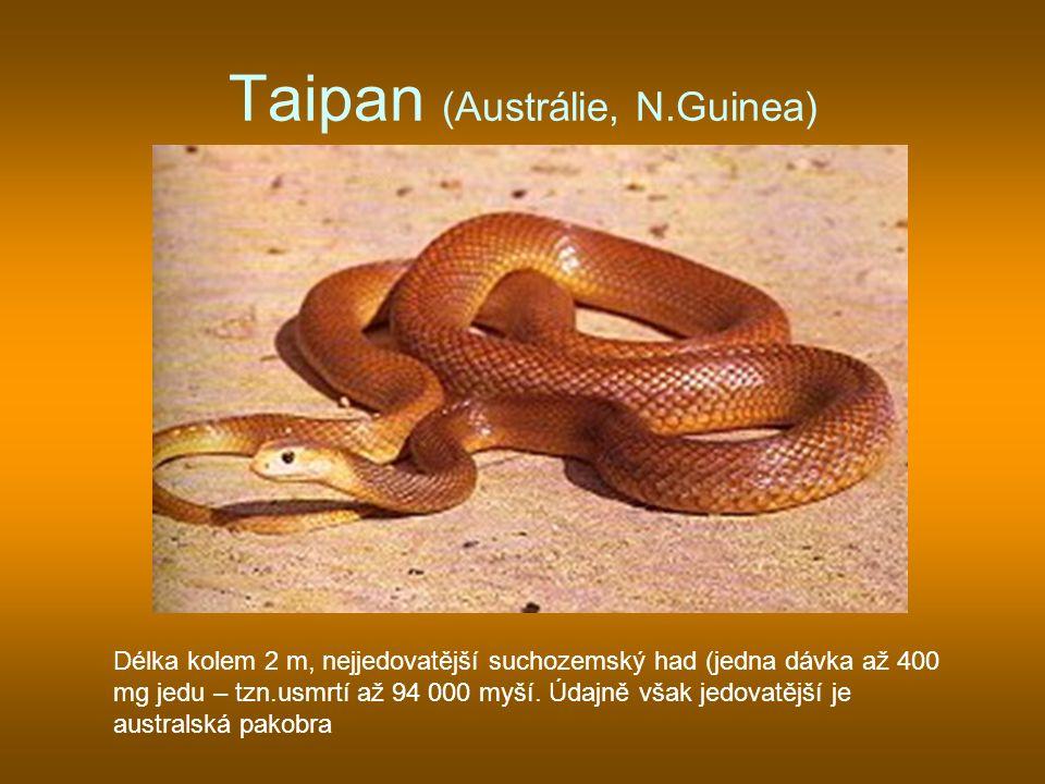 Taipan (Austrálie, N.Guinea) Délka kolem 2 m, nejjedovatější suchozemský had (jedna dávka až 400 mg jedu – tzn.usmrtí až 94 000 myší. Údajně však jedo