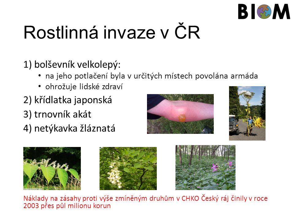 Rostlinná invaze v ČR 1) bolševník velkolepý: na jeho potlačení byla v určitých místech povolána armáda ohrožuje lidské zdraví 2) křídlatka japonská 3