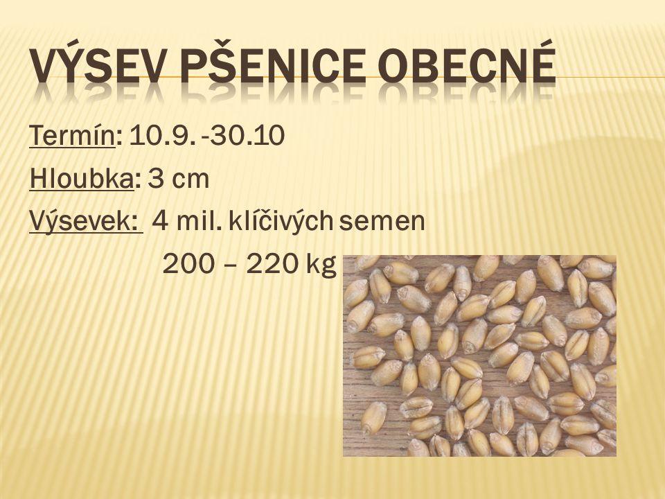 Termín: 10.9. -30.10 Hloubka: 3 cm Výsevek: 4 mil. klíčivých semen 200 – 220 kg