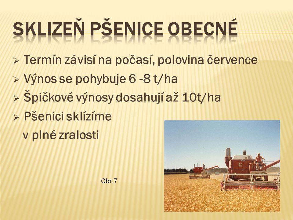  Termín závisí na počasí, polovina července  Výnos se pohybuje 6 -8 t/ha  Špičkové výnosy dosahují až 10t/ha  Pšenici sklízíme v plné zralosti Obr