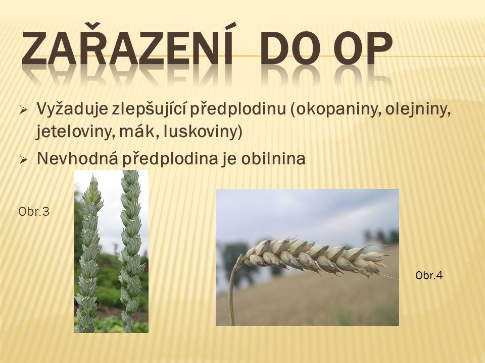  Vyžaduje zlepšující předplodinu (okopaniny, olejniny, jeteloviny, mák, luskoviny)  Nevhodná předplodina je obilnina Obr.3 Obr.4