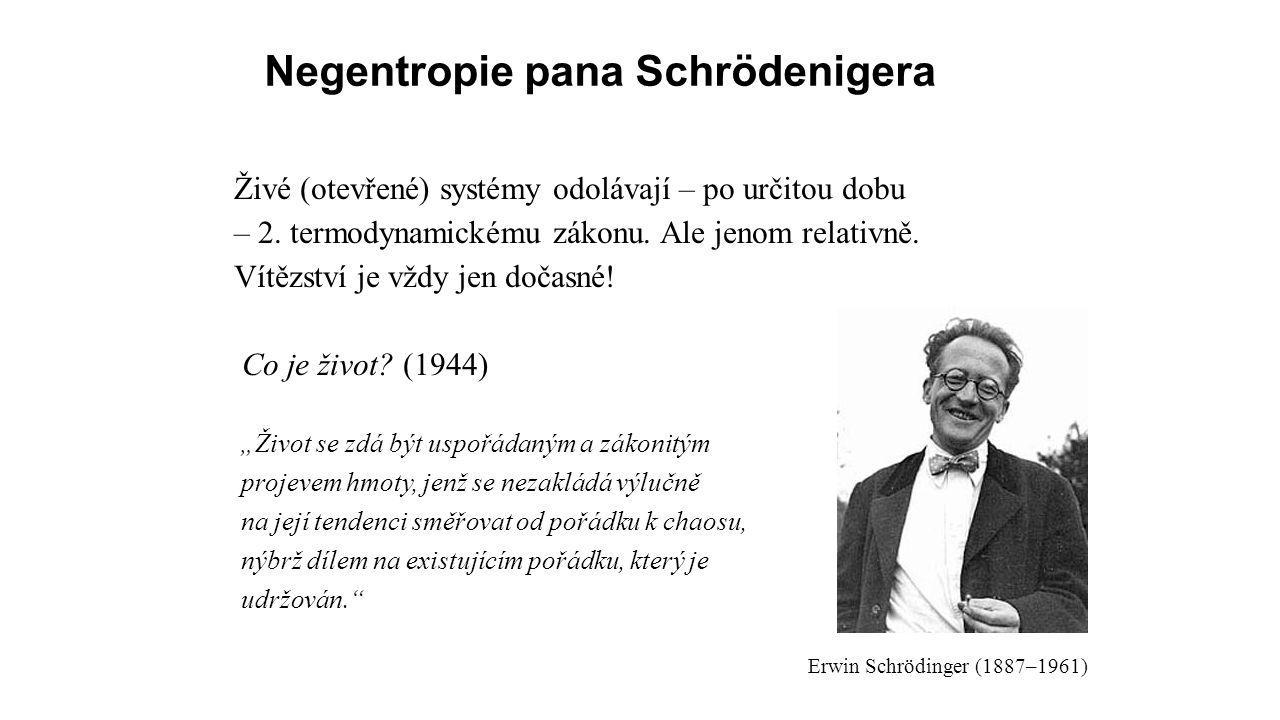 Negentropie pana Schrödenigera Živé (otevřené) systémy odolávají – po určitou dobu – 2.