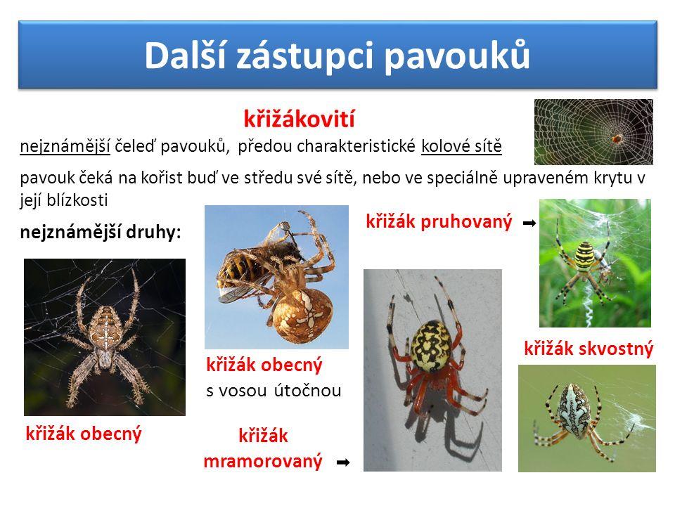 Další zástupci pavouků křižákovití nejznámější čeleď pavouků, předou charakteristické kolové sítě pavouk čeká na kořist buď ve středu své sítě, nebo ve speciálně upraveném krytu v její blízkosti nejznámější druhy: křižák obecný s vosou útočnou křižák pruhovaný křižák skvostný křižák mramorovaný