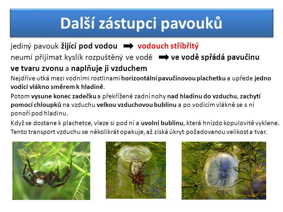 Další zástupci pavouků vodouch stříbřitý jediný pavouk žijící pod vodou neumí přijímat kyslík rozpuštěný ve vodě ve vodě spřádá pavučinu ve tvaru zvonu a naplňuje ji vzduchem Nejdříve utká mezi vodními rostlinami horizontální pavučinovou plachetku a upřede jedno vodící vlákno směrem k hladině.