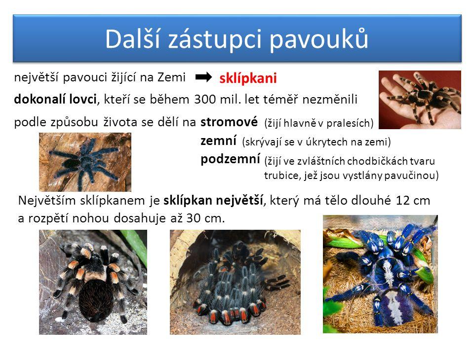 Další zástupci pavouků sklípkani největší pavouci žijící na Zemi dokonalí lovci, kteří se během 300 mil. let téměř nezměnili podle způsobu života se d