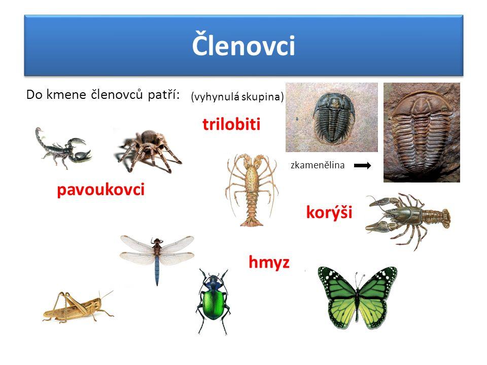 Členovci Do kmene členovců patří: trilobiti (vyhynulá skupina) zkamenělina pavoukovci korýši hmyz