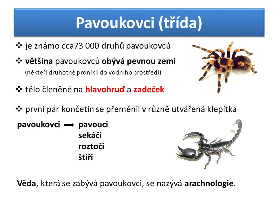 Pavoukovci (třída)  tělo členěné na hlavohruď a zadeček  většina pavoukovců obývá pevnou zemi (někteří druhotně pronikli do vodního prostředí)  je