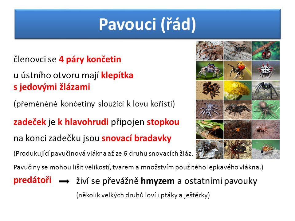 Pavouci (řád) členovci se 4 páry končetin u ústního otvoru mají klepítka s jedovými žlázami (přeměněné končetiny sloužící k lovu kořisti) zadeček je k hlavohrudi připojen stopkou na konci zadečku jsou snovací bradavky (Produkující pavučinová vlákna až ze 6 druhů snovacích žláz.