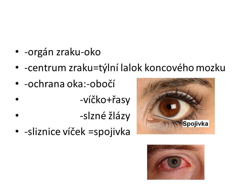 -orgán zraku-oko -centrum zraku=týlní lalok koncového mozku -ochrana oka:-obočí -víčko+řasy -slzné žlázy -sliznice víček =spojivka