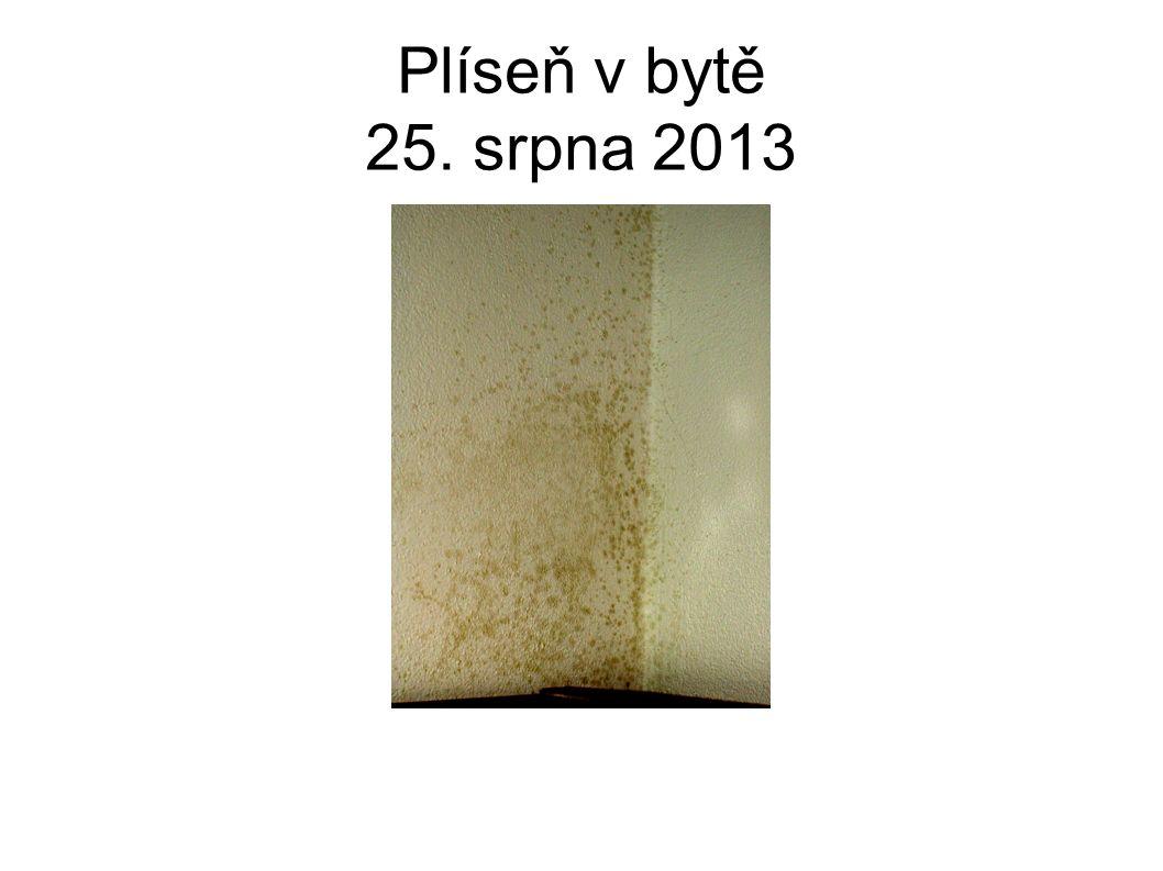 Plíseň v bytě 25. srpna 2013