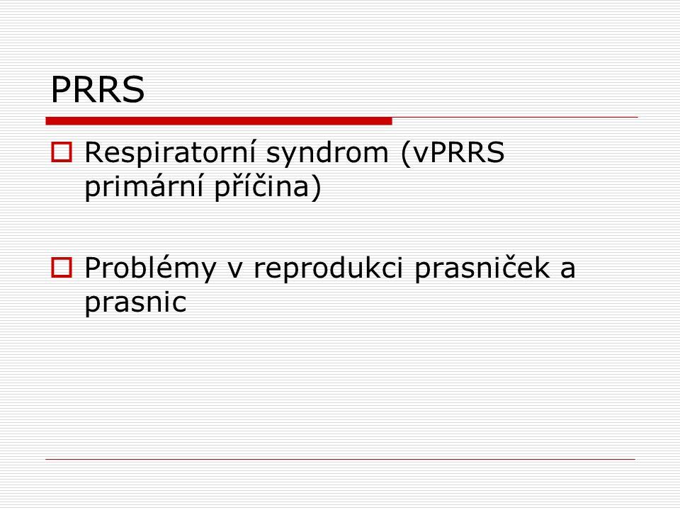 PRRS  Respiratorní syndrom (vPRRS primární příčina)  Problémy v reprodukci prasniček a prasnic