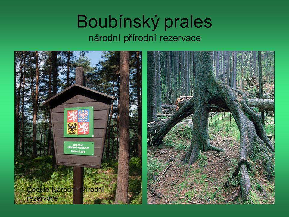 Boubínský prales národní přírodní rezervace Cedule Národní přírodní rezervace
