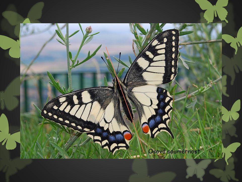 Svlačec rolní latinský název: Convolvulus arvensis čeleď: svlačcovité vytrvalý, výběžkatý, hluboce kořenící, velmi úporný plevelný druh Okraje polí a cest, úvozy, náspy, pole, zahrady, travnaté stráně.