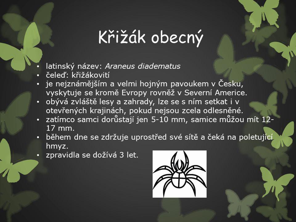 Křižák obecný latinský název: Araneus diadematus čeleď: křižákovití je nejznámějším a velmi hojným pavoukem v Česku, vyskytuje se kromě Evropy rovněž v Severní Americe.