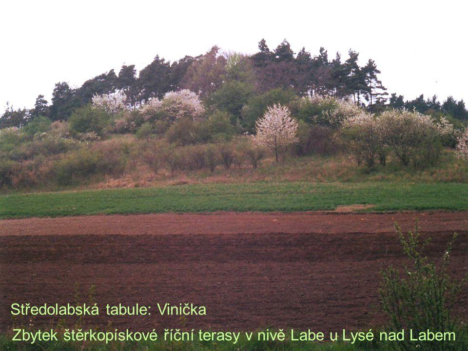 Zbytek štěrkopískové říční terasy v nivě Labe u Lysé nad Labem Středolabská tabule: Vinička