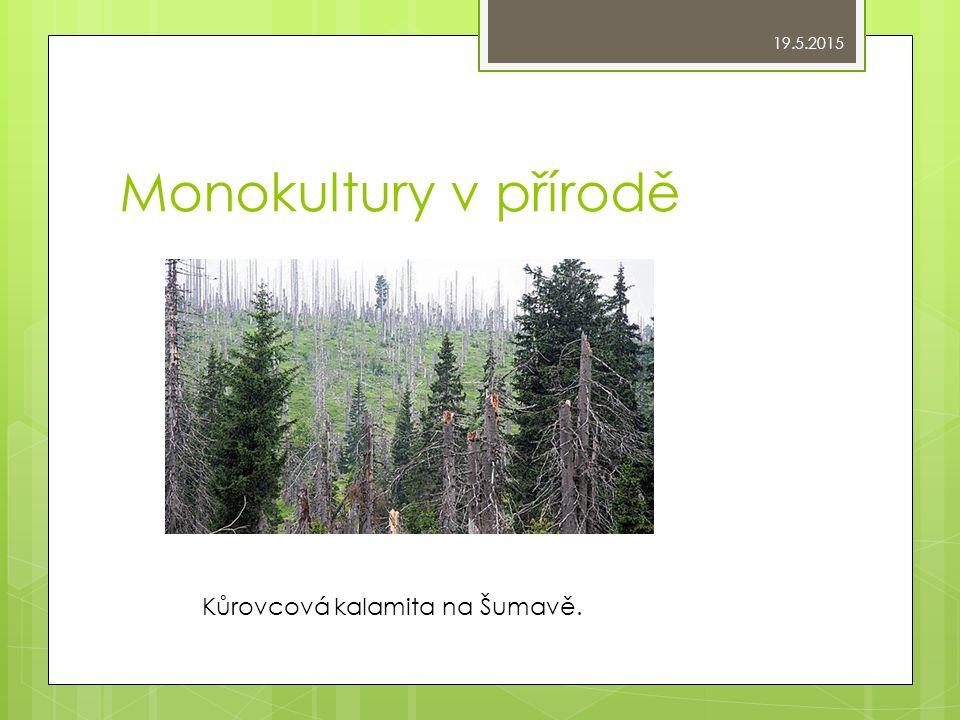 Monokultury v přírodě Kůrovcová kalamita na Šumavě. 19.5.2015