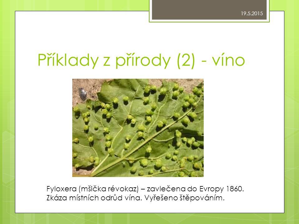 Příklady z přírody (2) - víno Fyloxera (mšička révokaz) – zavlečena do Evropy 1860.