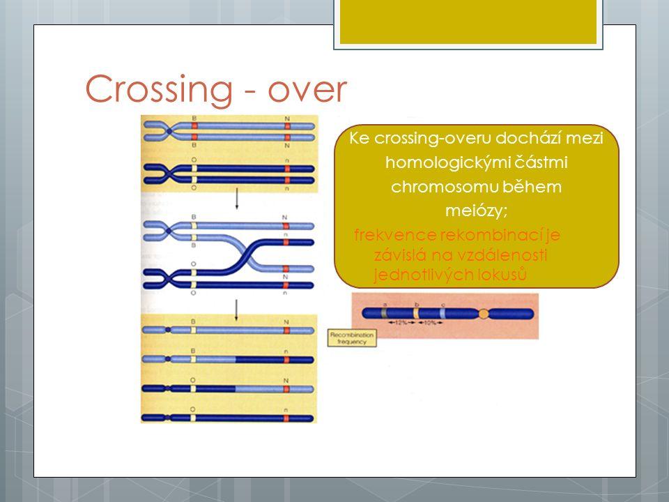 Síla vazby  Vzdálenost mezi geny na jednom chromozomu je úměrná počtu rekombinací (crossing-overů) mezi těmito geny.