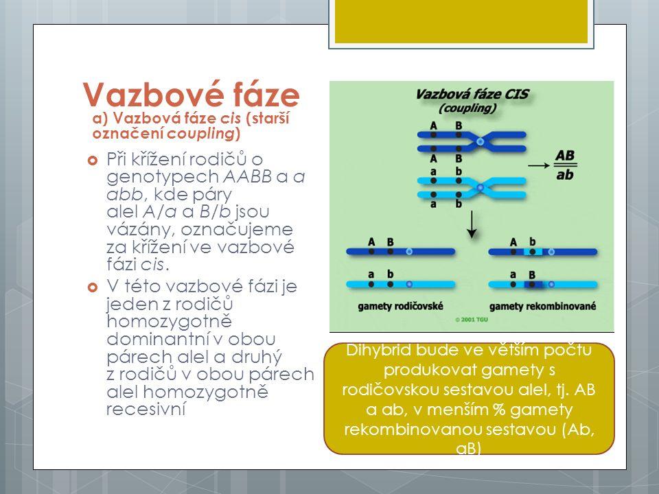 Vazbové fáze b) Vazbová fáze trans (starší označení repulsion)  Vazbou fází trans rozumíme situaci, kdy jen z rodičů je v jednom páru alel homozygotně dominantní a v druhém homozygotně recesivní (AAbb), přičemž druhý je svým genotypem vůči prvému reciproký (aaBB): Dihybrid bude produkovat více gamet s rodičovskou sestavou tj.