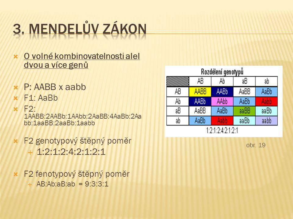  O volné kombinovatelnosti alel dvou a více genů  P: AABB x aabb  F1: AaBb  F2: 1AABB:2AABb:1AAbb:2AaBB:4AaBb:2Aa bb:1aaBB:2aaBb:1aabb  F2 genoty