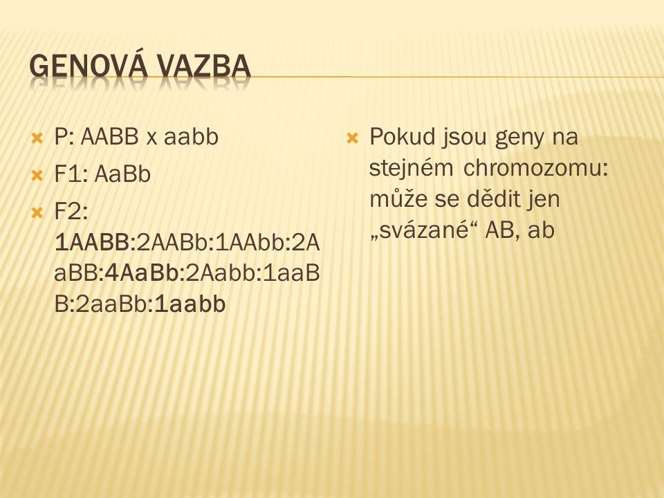 """ P: AABB x aabb  F1: AaBb  F2: 1AABB:2AABb:1AAbb:2A aBB:4AaBb:2Aabb:1aaB B:2aaBb:1aabb  Pokud jsou geny na stejném chromozomu: může se dědit jen """""""