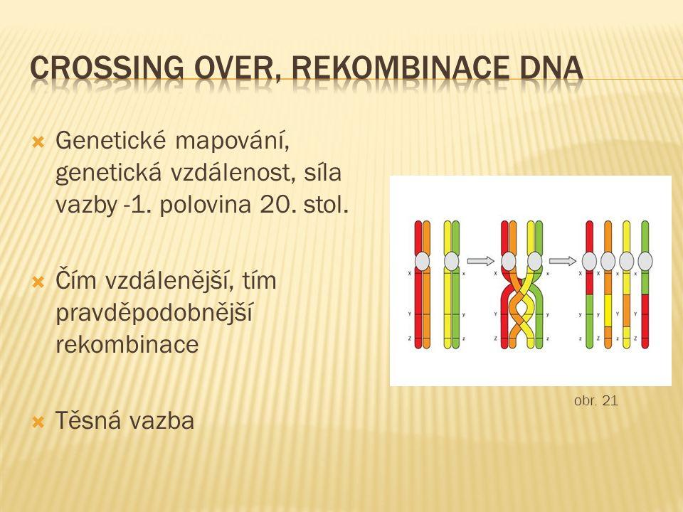  Genetické mapování, genetická vzdálenost, síla vazby -1. polovina 20. stol.  Čím vzdálenější, tím pravděpodobnější rekombinace  Těsná vazba obr. 2