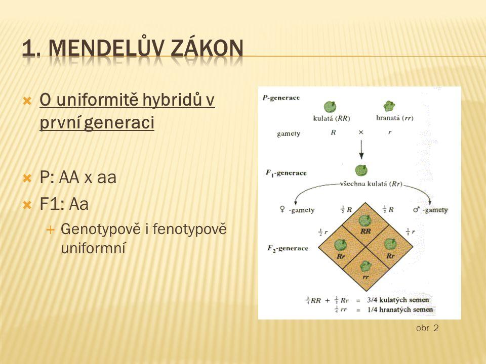  O uniformitě hybridů v první generaci  P: AA x aa  F1: Aa  Genotypově i fenotypově uniformní obr. 2