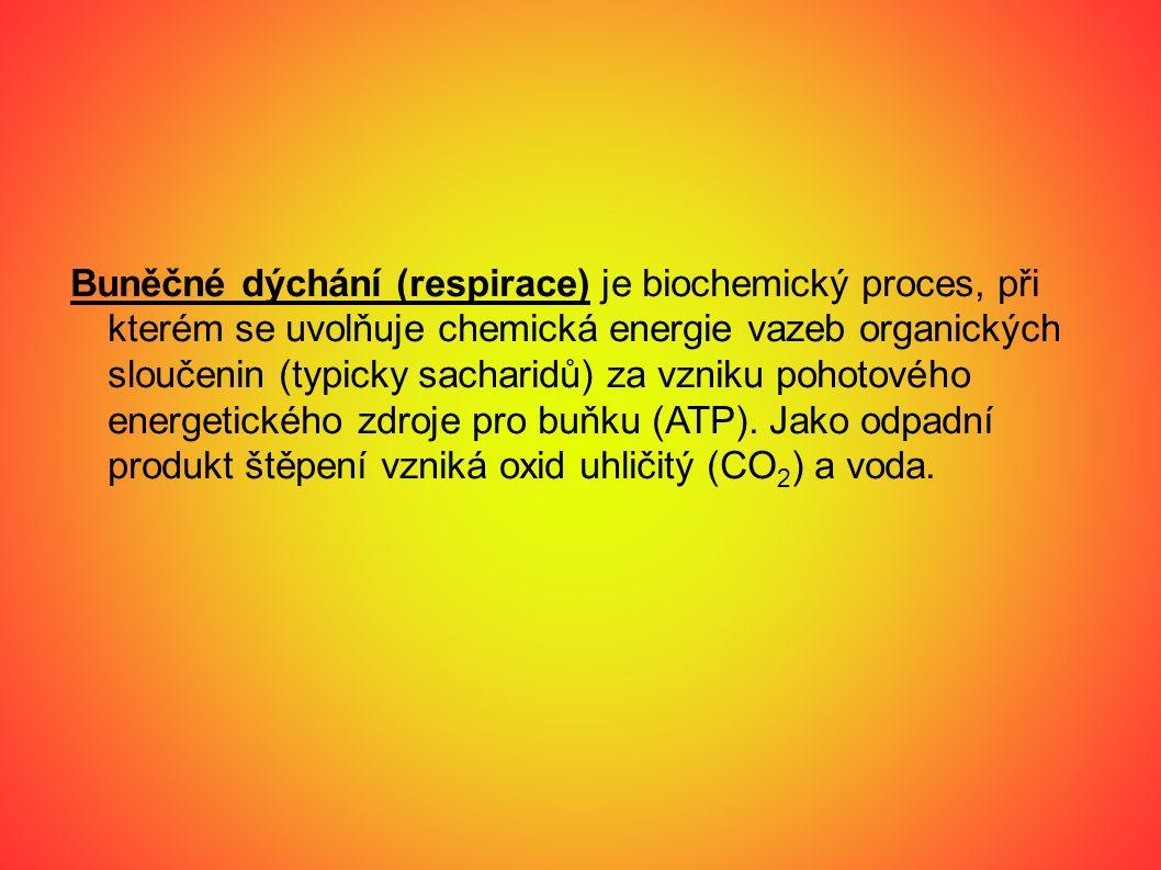 Buněčné dýchání (respirace) je biochemický proces, při kterém se uvolňuje chemická energie vazeb organických sloučenin (typicky sacharidů) za vzniku pohotového energetického zdroje pro buňku (ATP).