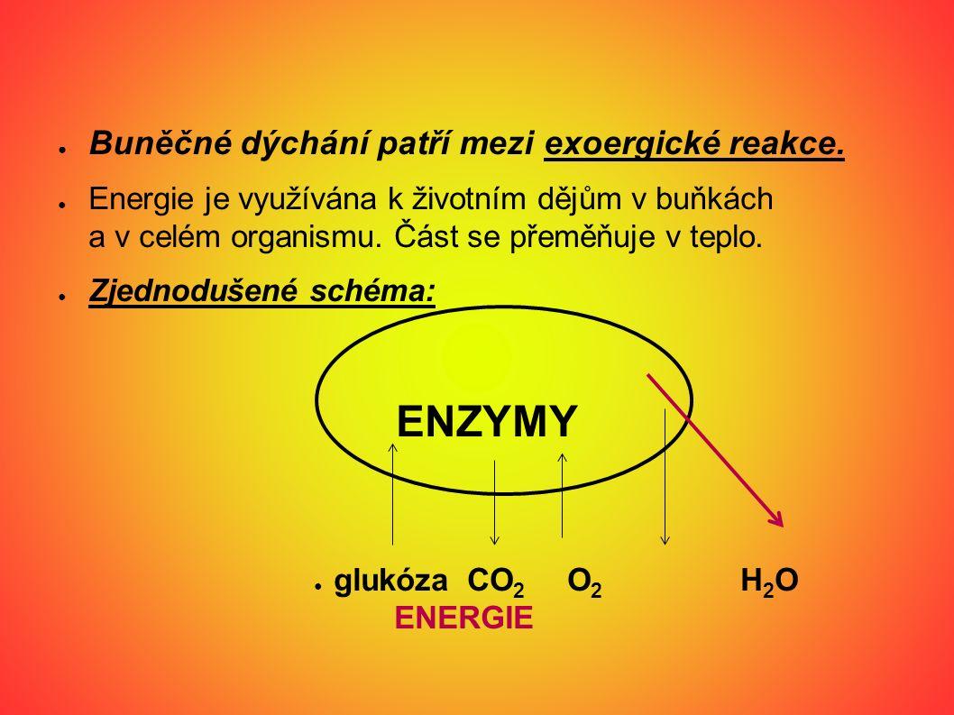 Chemická rovnice buněčného dýchání: C 6 H 12 O 6 + 6 O 2 + 6 H 2 O → 6 CO 2 + 12 H 2 O