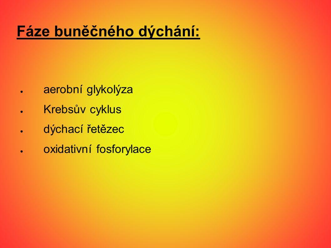 Fáze buněčného dýchání: ● aerobní glykolýza ● Krebsův cyklus ● dýchací řetězec ● oxidativní fosforylace